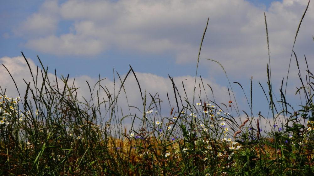 Faul sein in einer Blumenwiese