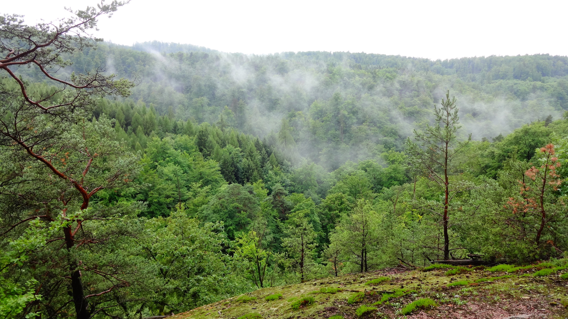 Nebelschwaden über den Baumkronen