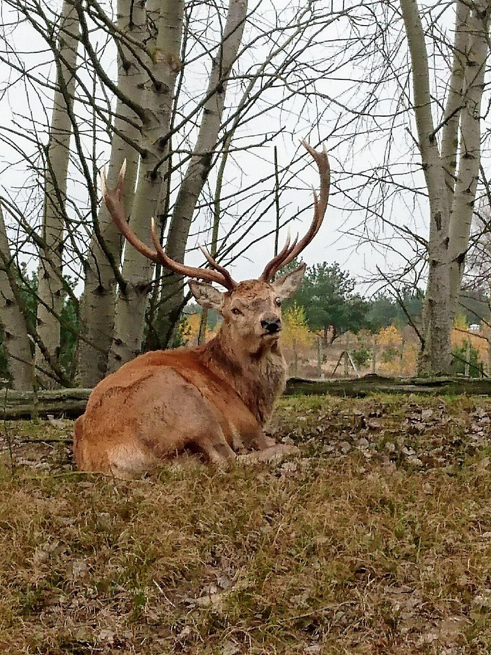Großstadt Bambi in groß